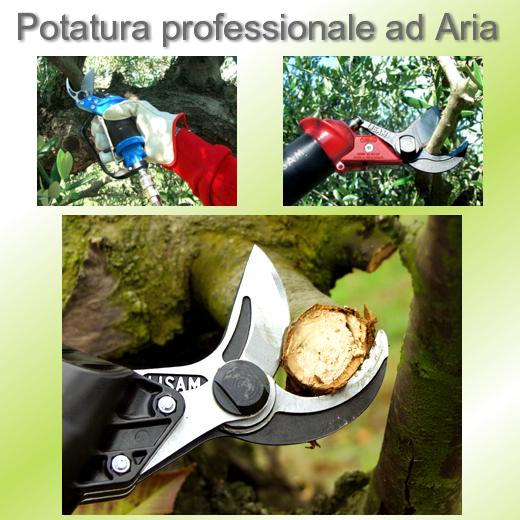 Potatura professionale ad aria Lisam per frutteti, uliveti, e giardinieri.
