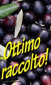 Il mondo degli scoti olive, per la raccolta delle olive nei campi ed in collina. Un raccolto favorevole grazie all'aiuto della meccanizzazione moderna.