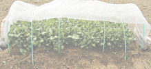 Verdura coltivata in giardino e nell'orto da privati.